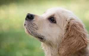 חוקים ותקנות שבעלי כלבים חייבים להכיר